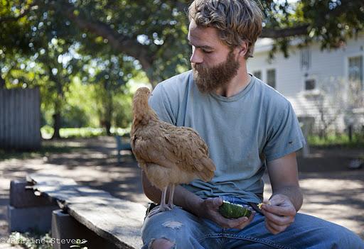Carol Ann's Chickens