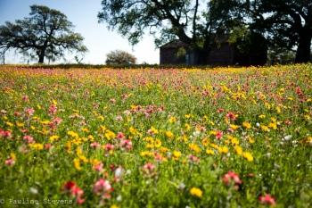 Floresville, TX