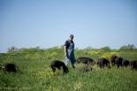 Heritage pork farm-3