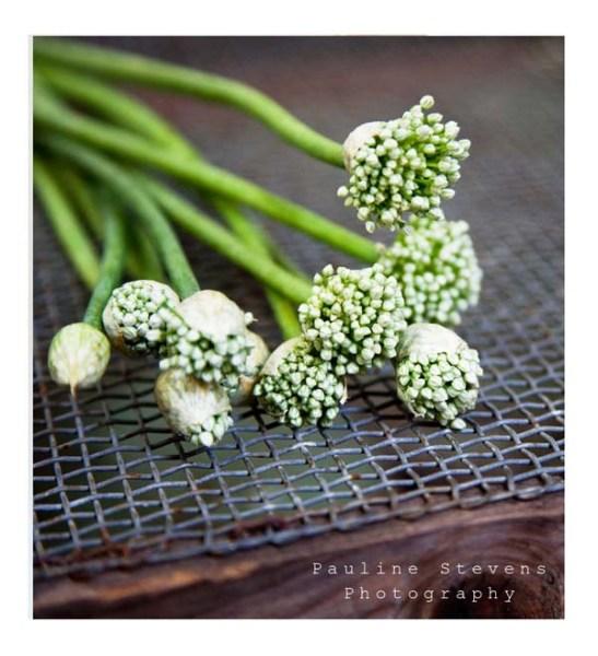 garlic blossoms web