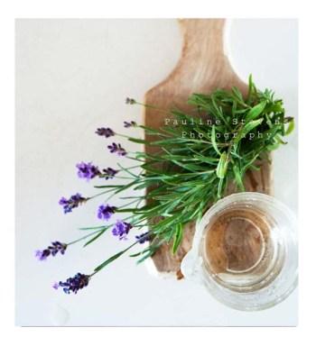 lavender web
